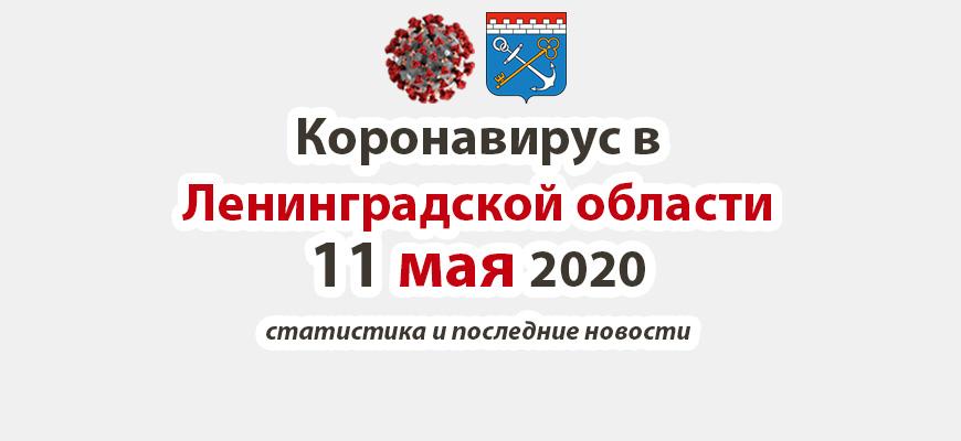 Коронавирус в Ленинградской области 11 мая 2020